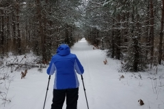 Pine-Grove-Trail-snowshoeing-002-reduced